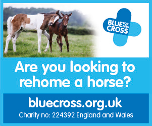 Blue Cross 2020 B (Nottinghamshire Horse)