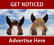 Get Noticed (Nottinghamshire Horse)